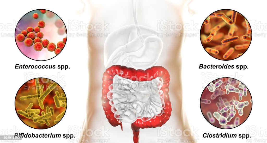 Large intestinal microbiome stock photo