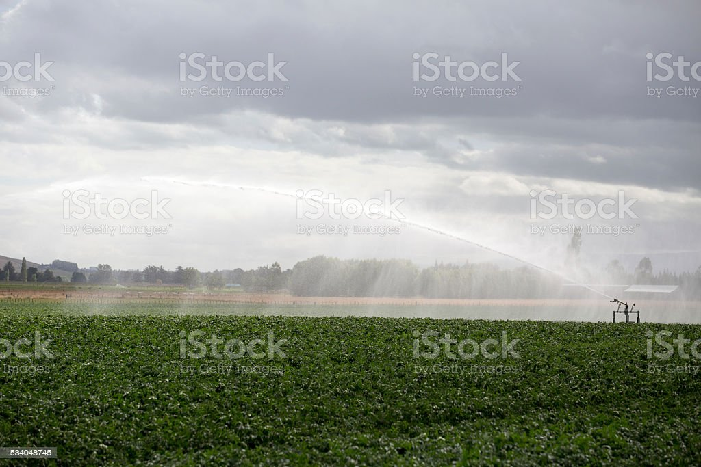 Large irrigation of crops in large field, New Zealand stock photo