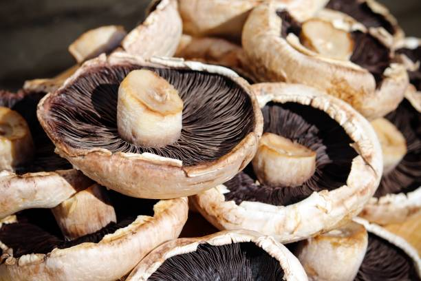 Large juicy portobello mushrooms stock photo