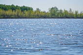 Large lake or river in good Sunny weather. The ripples on the water