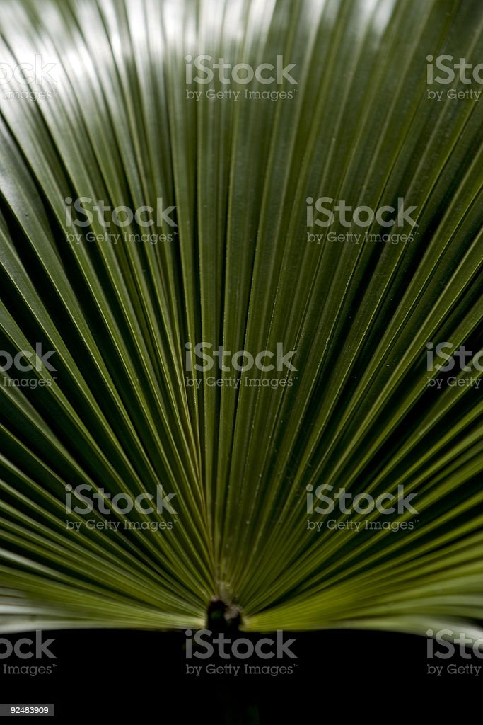 Large leaf pattern royalty-free stock photo