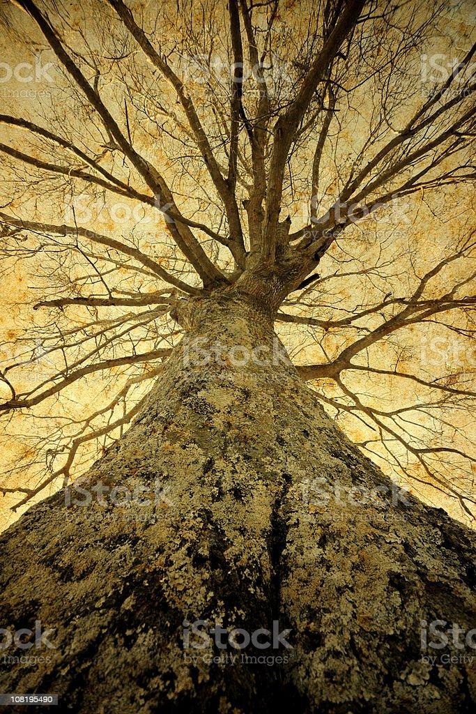 Large Leafless Oak Tree royalty-free stock photo