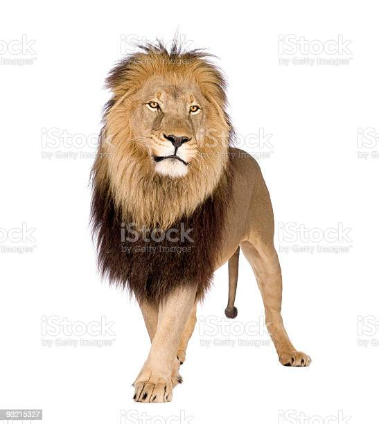 Large lion on a white background picture id93215327?b=1&k=6&m=93215327&s=612x612&h=cyn2nvfetulsqwccut7h lxuf86oe xioi61ai9bvjw=