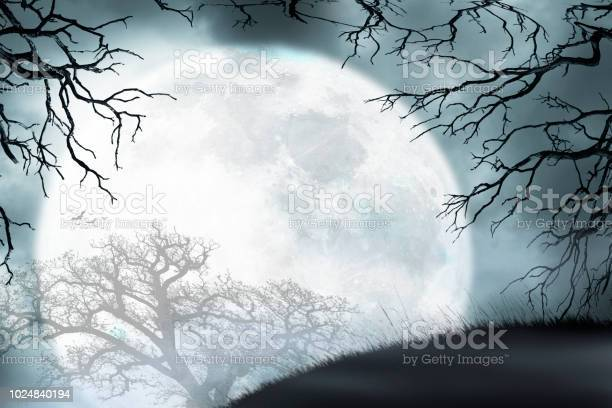 Large moon rises over small hill framed by bare trees picture id1024840194?b=1&k=6&m=1024840194&s=612x612&h=yzhwff2mk4cfaxpa6tn80cr2lgjhzl6qyxc5 lg1jgg=