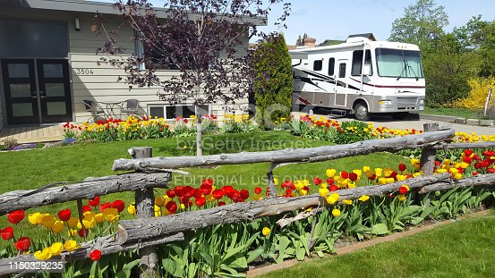 Vernon,British Columbia,Canada- May 5,2019:  Front yard of home with beautiful array of Spring Tulips. Motor home parked in driveway. Rustic wooden fence.