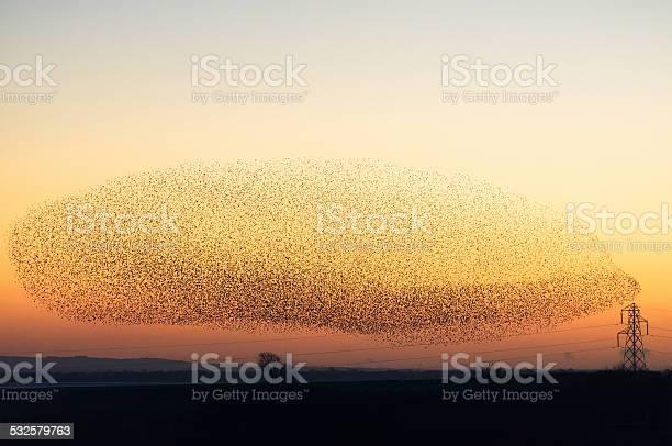Photo of Large murmuration of starlings at dusk