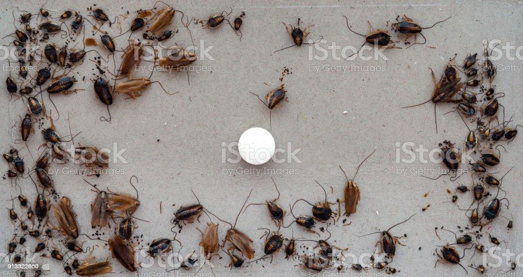 Fotografía de Una Gran Cantidad De Cucarachas Muertas Que Murió ...