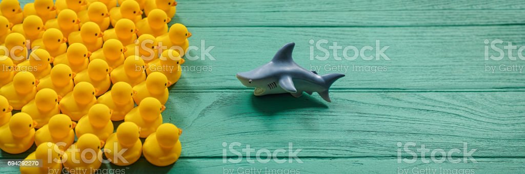 Large number of yellow rubber ducks on an old turquoise wooden table facing a ferocious rubber shark. stock photo