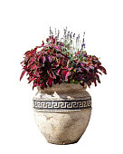 Large old ceramic vase with different flowers, vintage style. Big pot with red coleus plant shrub and purple lavender. Greek amphora with growing floral bouquet isolated on white background