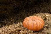 Large orange pumpkin on a haystack, copy space. Beautiful huge pumpkin with ribs and furrows, Halloween postcard background, Thanksgiving, harvest.