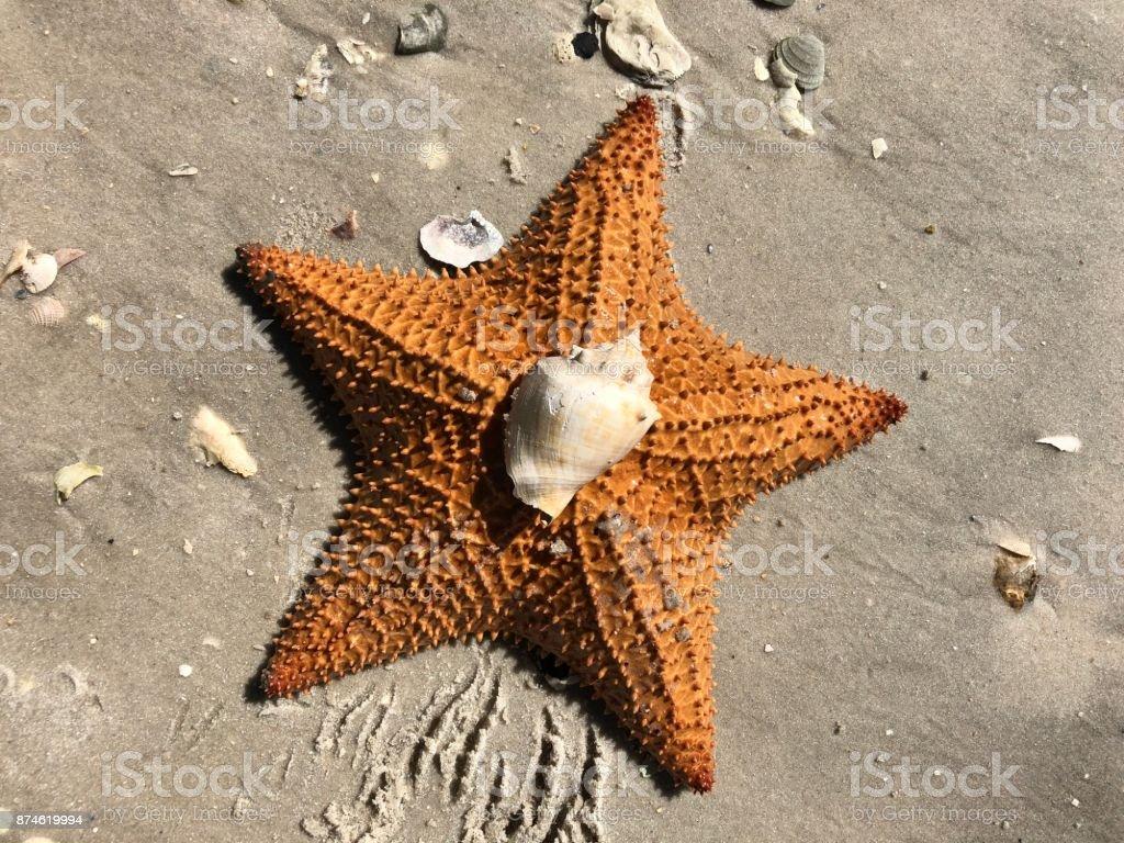 large orange sea star (starfish) on the sand stock photo