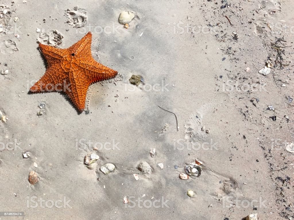large orange sea star on the sand stock photo