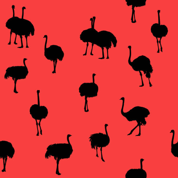Large ostriches – zdjęcie
