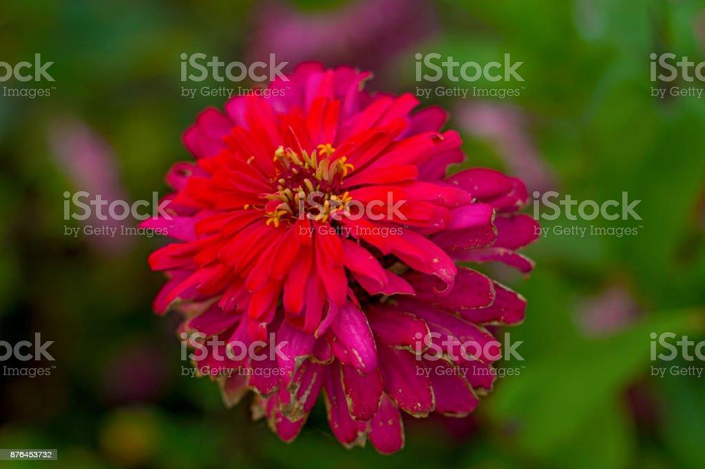imagens grandes de flores. bela flor no jardim. - foto de acervo