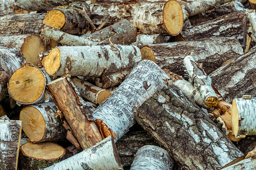 large pile of birch wood close up. tree is cut into logs, the house or bathhouse is heated with birch wood. Birch wood is the best fuel for the stove