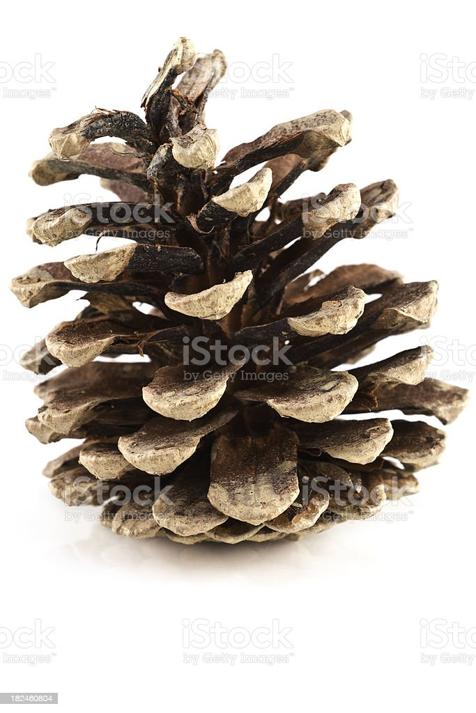 Large Pine cone royalty-free stock photo
