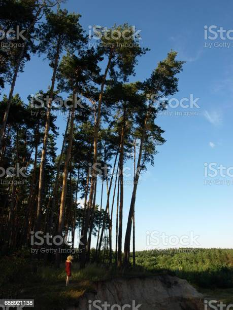 Photo of Large pine tree near near the cliff, A human to compare