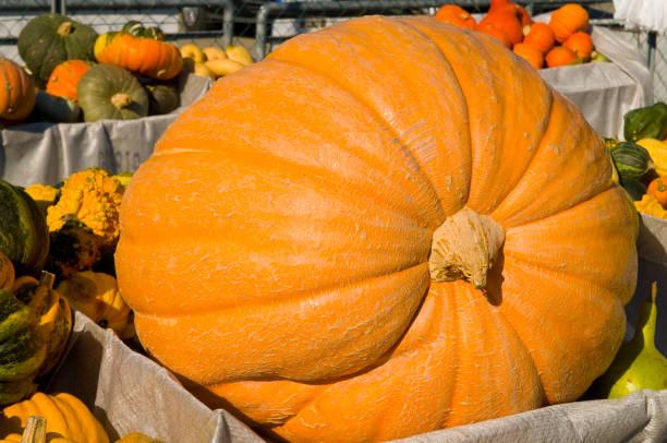 Großen Kürbis auf einem Markt im Herbst – Foto