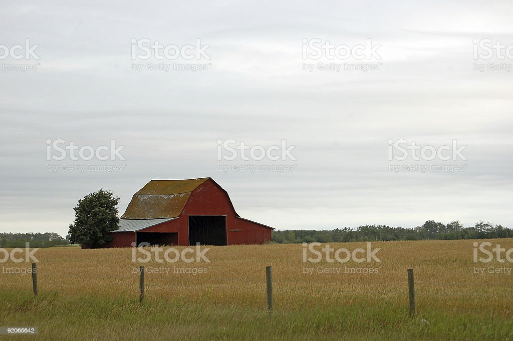 Large, red barn in a large grain field - autumn royalty-free stock photo