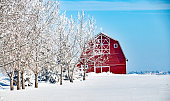 Establishing shot of Midwestern farm in winter. Wagons, agricultural field covered in first snow in the foreground, red barns in the background. Aerial view of American countryside landscape