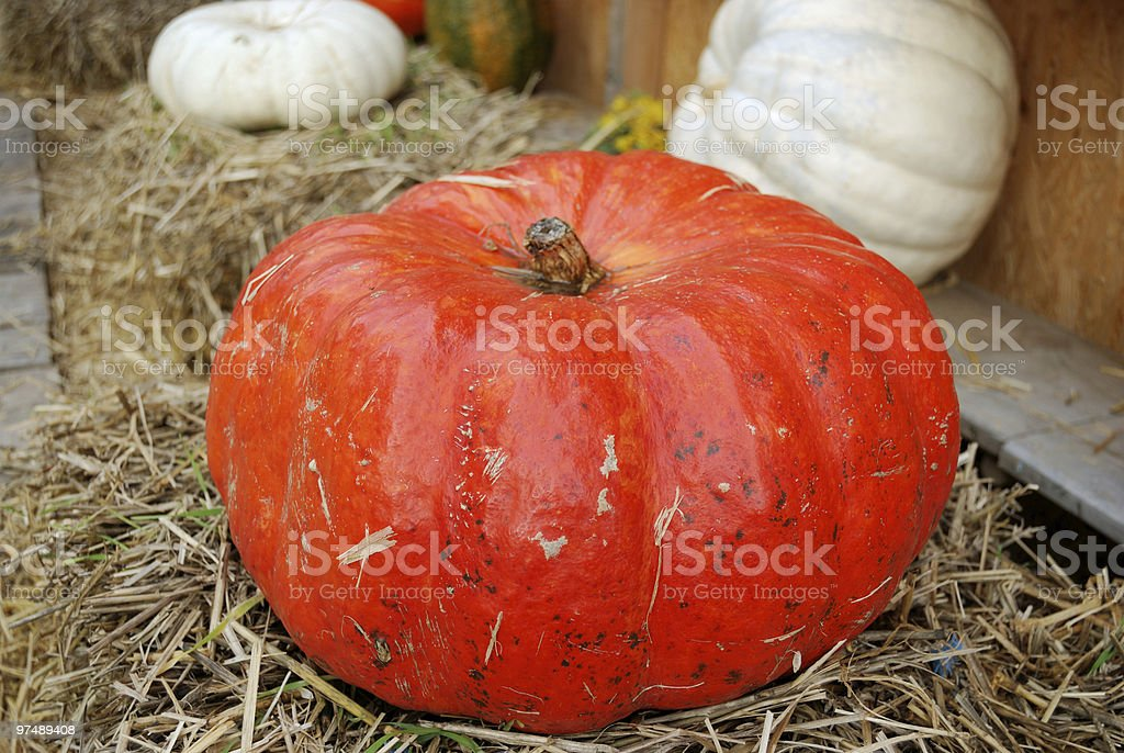 Large red ripe pumpkin royalty-free stock photo