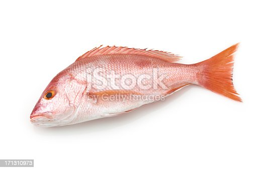 Fresh Raw Red Snapper Isolated on White Background