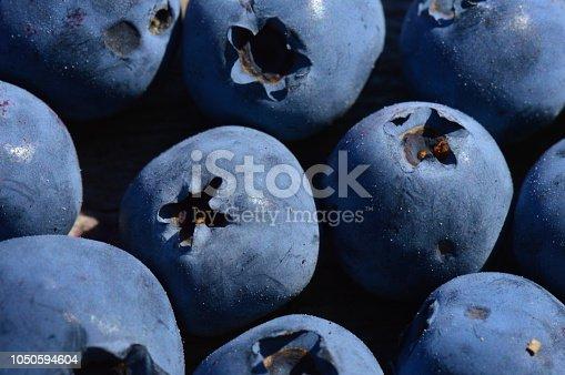 867774250istockphoto Large ripe blueberry berries harvest of summer swamp fresh fragrant fruit 1050594604