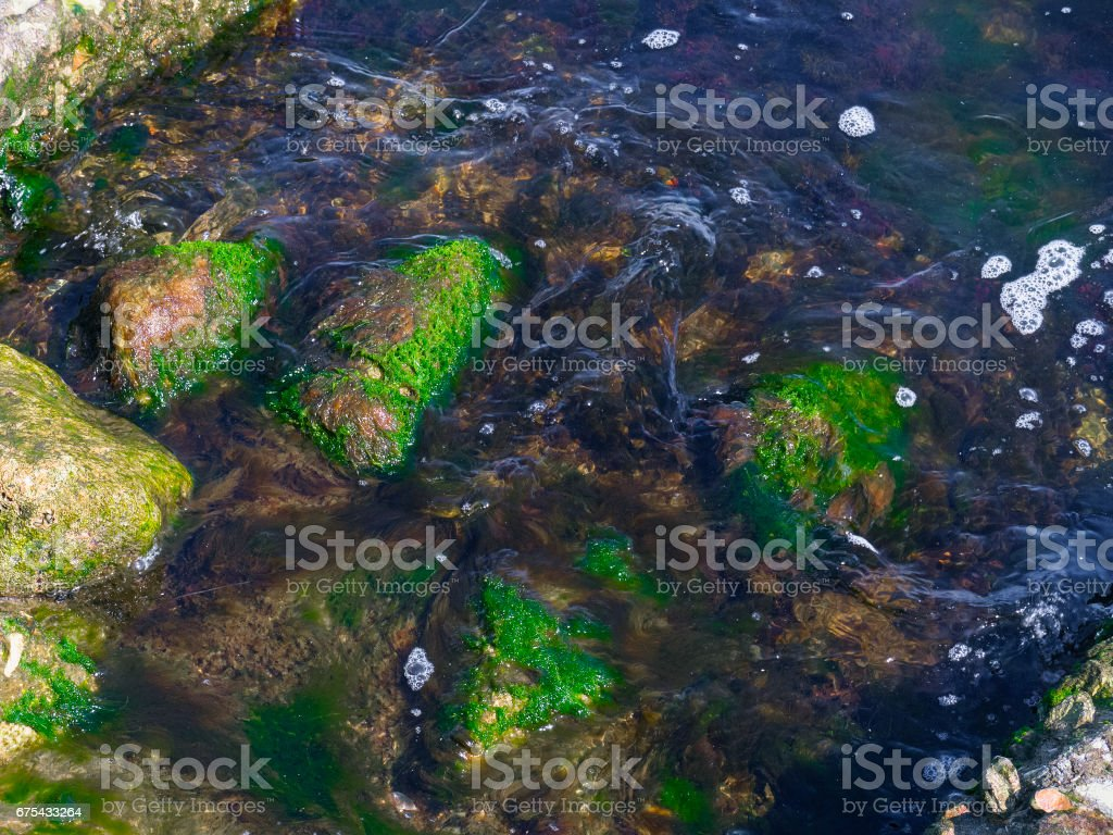 Large rocks and green seaweed in the sea royalty-free stock photo