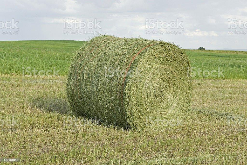 Large round bale stock photo