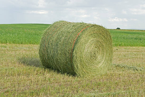 Large round bale stock photo