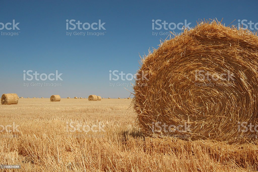Large round straw bales royalty-free stock photo