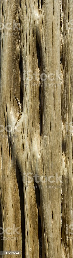 Large Saguaro Cactus Closeup royalty-free stock photo