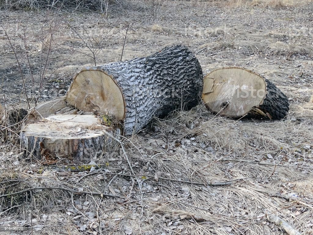 Large sawn wood and stump in the grass in the open air stock photo