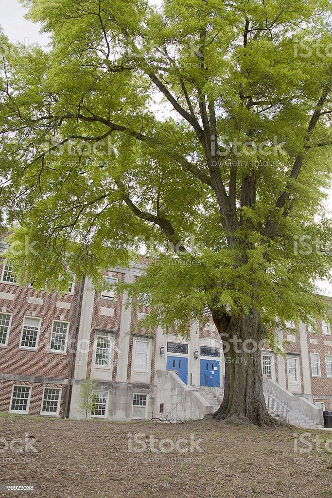 Large Schoolyard Tree royalty-free stock photo