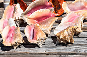 Large sea shells in red and orange colors for sale at a beach stall during the daytime. The image is taken in Freeport, Bahamas.