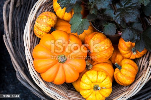 Horizontal color image depicting a huge selection of halloween pumpkins displayed and for sale at London's Borough Market. The pumpkins are available in all shaped and sizes, and for different prices. Seasonal autumnal image with copy space.