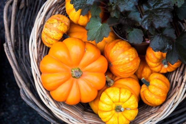 Large selection of halloween pumpkins on display at Borough Market, London, UK stock photo