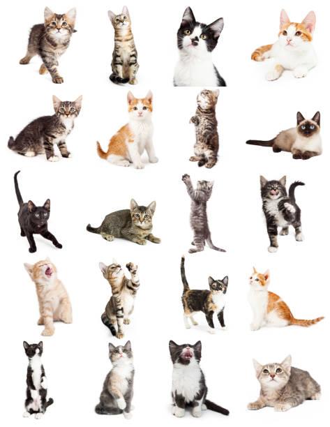 große anzahl von süßen verspielten kätzchen - spielesammlung stock-fotos und bilder