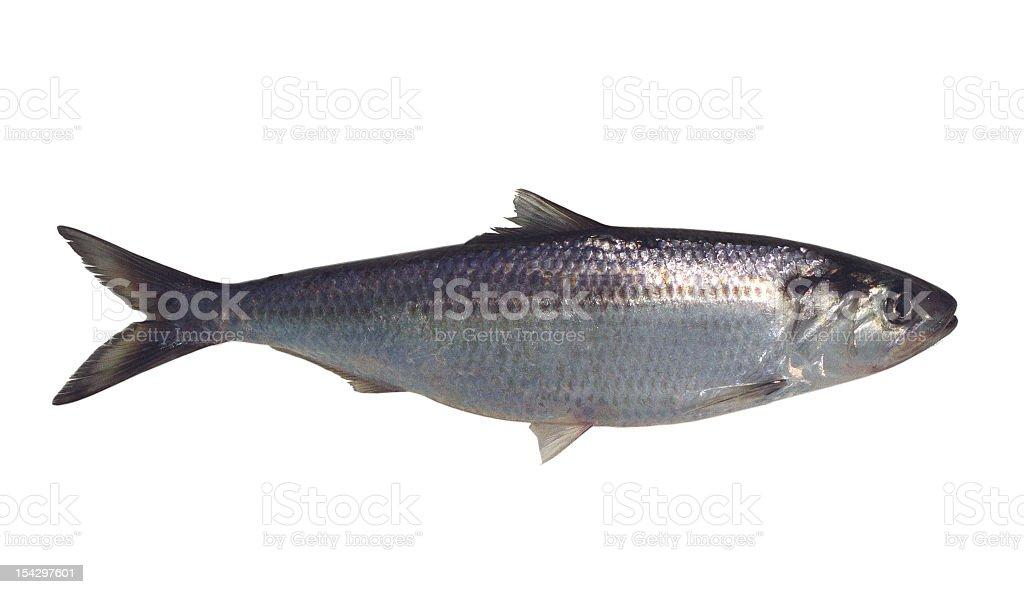 Fisch. - Lizenzfrei Fisch Stock-Foto
