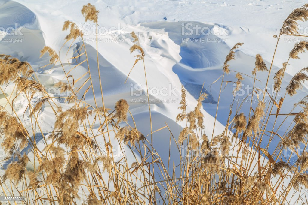 Large snow drifts and dried reeds on a winter sunny day stock photo