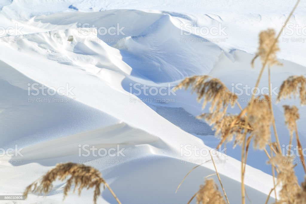 Large snow drifts and reeds on a winter sunny day stock photo