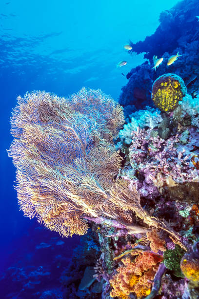 large soft coral on a reef stock photo