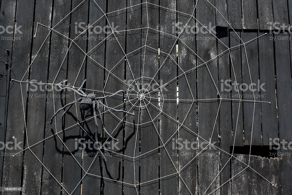Large Spider and Web stock photo