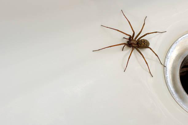 Spider im Bad – Foto