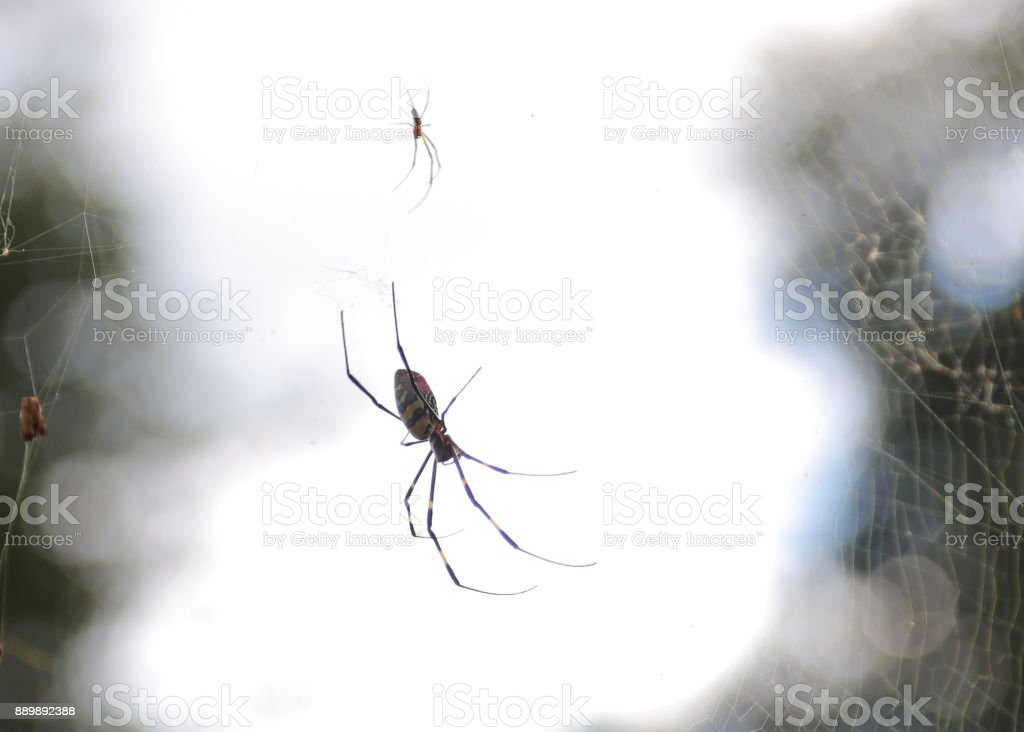 A large spider in web stock photo