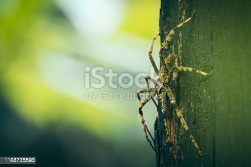 Tropical rainforest. Close up on large spider