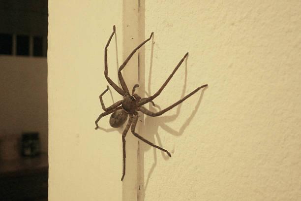 large spider on the wall - araignée photos et images de collection