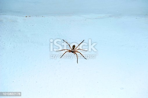 Large spider on the white wall
