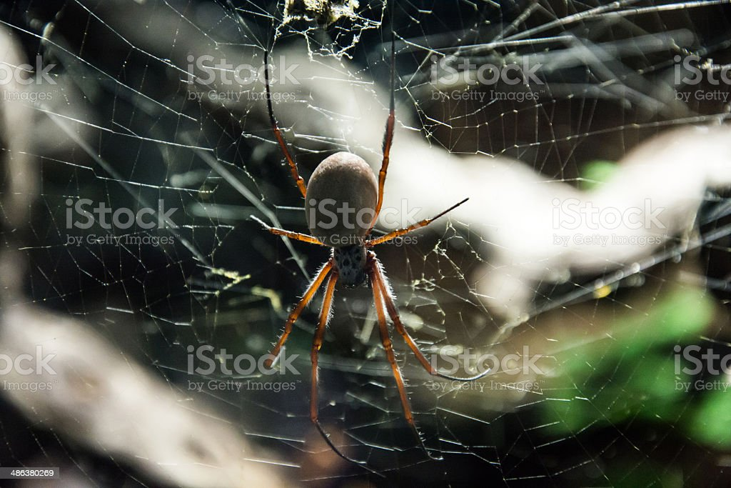 Large spider on web stock photo