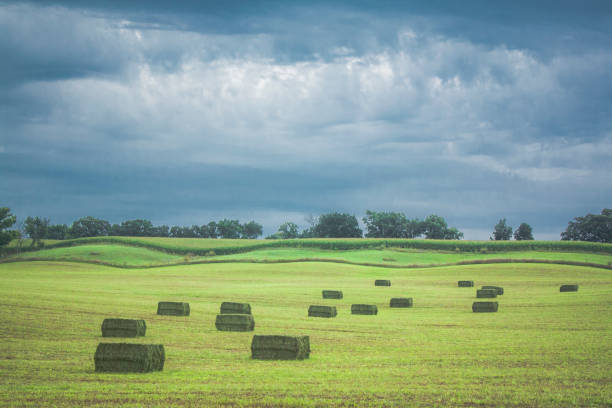 large square hay bales in a field with storm clouds. - erba medica foto e immagini stock
